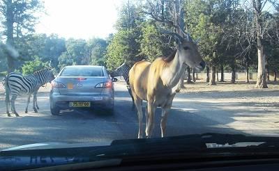 safari israel
