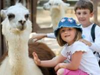children petting a allpaca