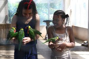 feeding lorikeets at bird kingdo