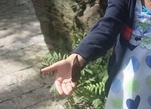butterfly conservtor