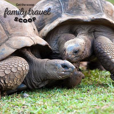 Sri Lanka turtle hatchery