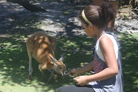feeding the kangaroo at Caversham Wildlife Park