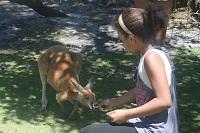 feeding the kangaroo at Caversham Wildlife Park