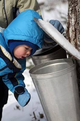 child at maple syrup farm in Quebe