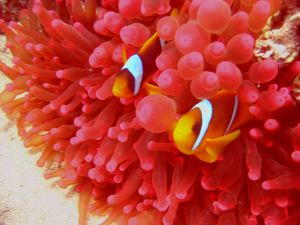 close up of fish an coral
