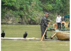 Cormorant fishing show