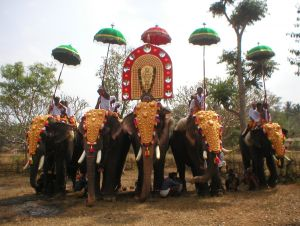 elephants in AgraIndia