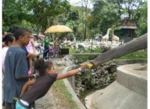 elephant zoo in kl