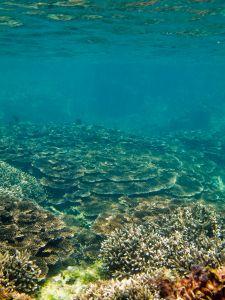 under water in Fiji