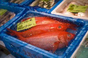 Tsukiji Fish Marke
