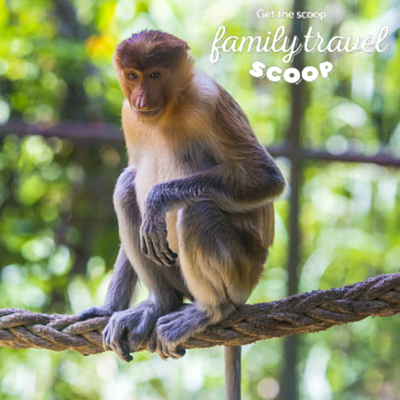 monkey in kotakinablu