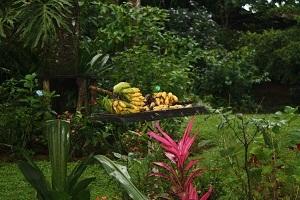 fresh fruit costa rica
