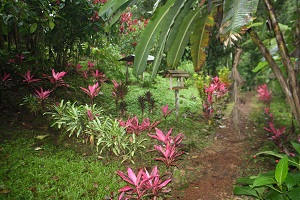 garden is costa rica