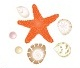 starfish ad seashells
