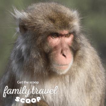 monkeypark kyoto