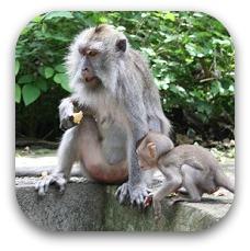 monkey in bali
