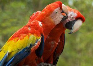 parrots at Loro Parque