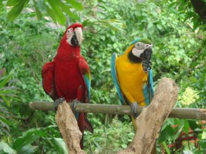 jarong bird park with parrots