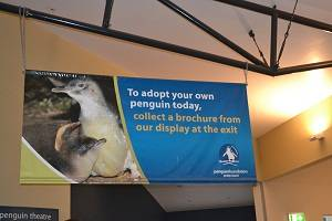 sign at penguin parade