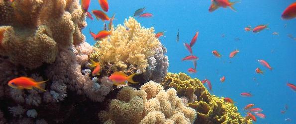 marine life snorkling