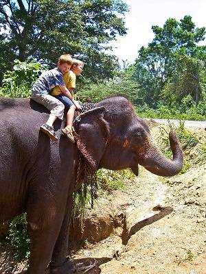 riding on an elephant in sri lank