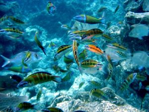 tropical fish in ocea