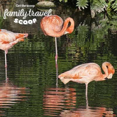 flamingos bali park