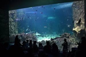 auckland aquarium
