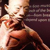 body museum nyc skull