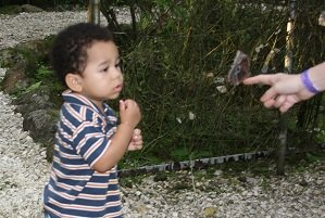 butterfly with baby