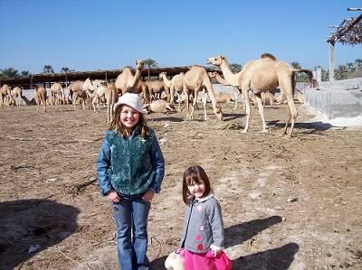 camel market in Al AI