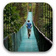 tree bridge costa rica