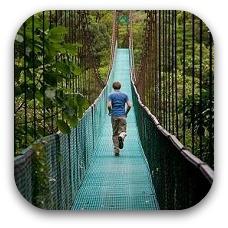 tree bridge costa rica