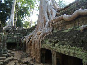 jungle temple in siem reap