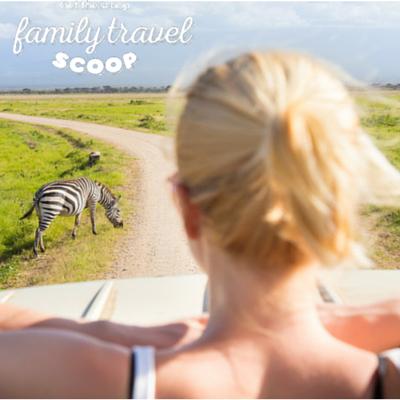 kenya safari zebra