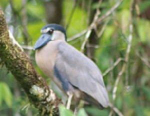 lago jalapa bird