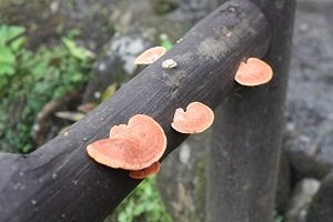 colourful mushrooms costa rica