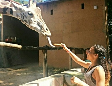 feeding the giraffe at the Puerto Vallarta zoo