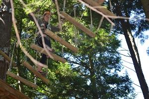 log walk treetop